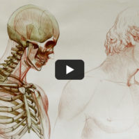 Free Anatomy for Artists Video Lessons