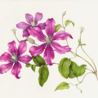 Drawing Spring Flowers Workshop