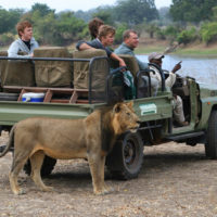 Plein Air Safari – Zambia