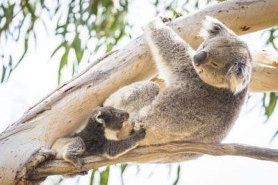 kangaroo_island_10
