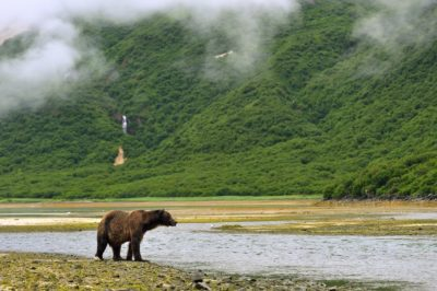 Alaska: Brown Bears