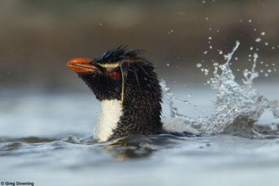 Falkland Islands Photography Workshop © Greg Downing