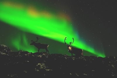 GreatCanadianWildlife-aurora
