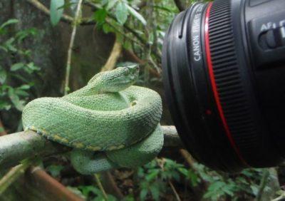 untamed-rainforest