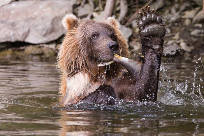 griz with fish