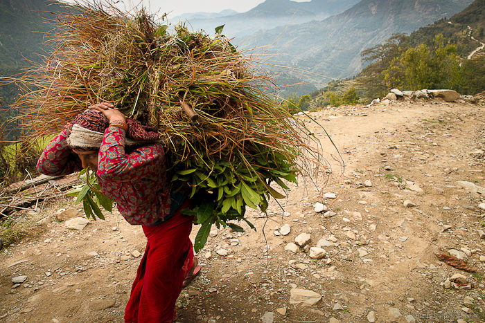 — It's not uncommon for villagers to walk several kilometers through rugged terrain just to gather fodder for their livestock or sugar cane for their children.