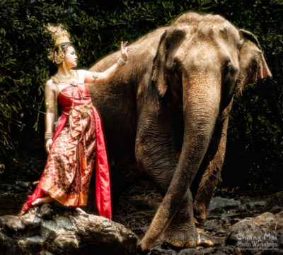 Thai Beauty with an Elephant