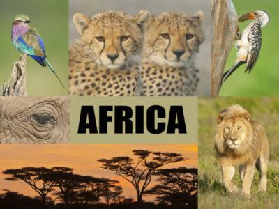 Africa final 2016