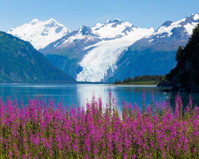 Alaska's Glaciers, Icebergs, and Wildflowers Up Close Photo Tour July 26, 2017 with DeYoung Photo Workshops, LLC