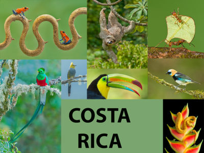 Costa Rica Montage new