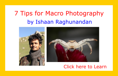 Tips-from-the-Pros-Ishaan