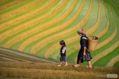 David Lazar image of rice terraces in Mu Cang Chai, Vietnam for Luminous Journeys