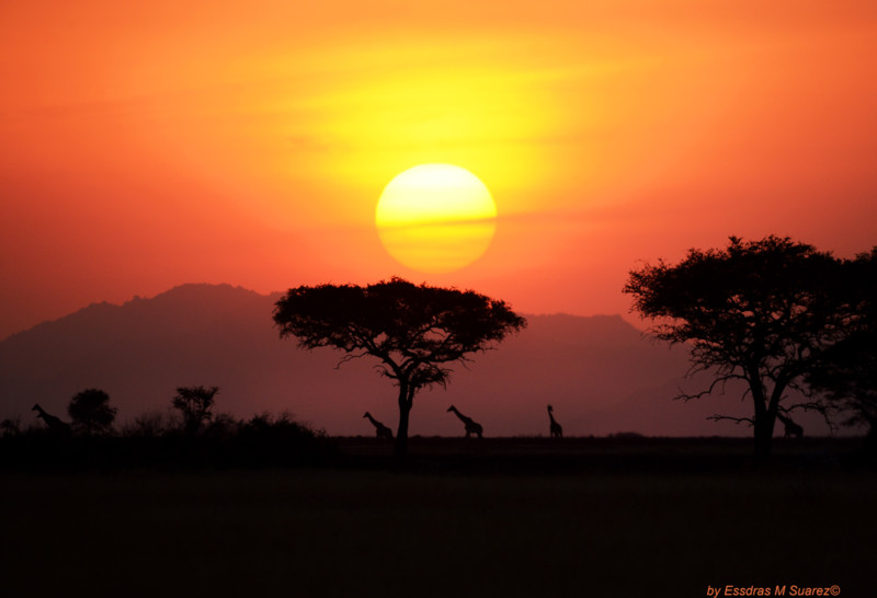Serengeti National Park 08-21/22-13   At the Grometi Camp at what is known as the Serengeti National Park's Narrow Corridor near the border with Kenya. (Essdras M Suarez/ EMS Photography