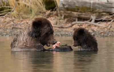 Chilko 74 Hemmings