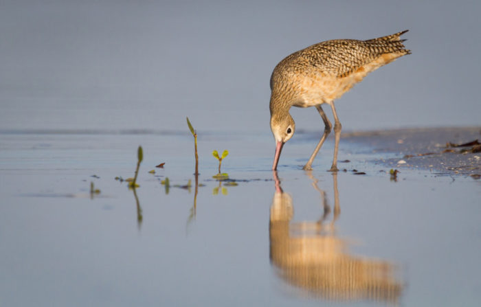 Florida Birding and Beaches