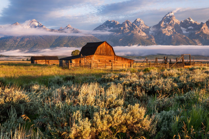 Early morning fog around the Mormon Row barns in Grand Tetons
