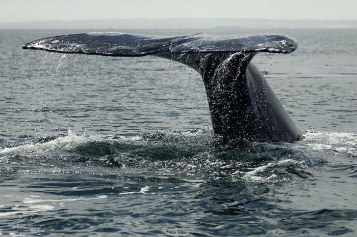 baja-whales-jim-6