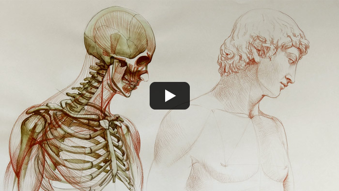 Free Anatomy Video Lessons For Artists International Directory Of