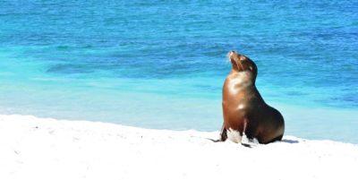 Sea lion on the beach Galapagos