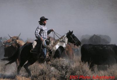 WD Colorado List 700x500x150