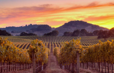 Photographing Fall Color in California's Wine Country