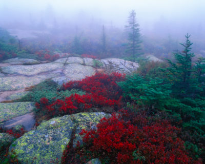 Autumn color surrounded by  fog atop Cadillac Mountain in Acadia National Park, Maine.